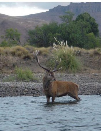 Red Stag Patagonia – Free-Range Big Game Hunts in Argentina and Gold-Medal Fly-Fishing in Chile.