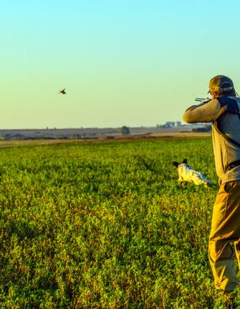 River Plate Wingshooting – Mixed-bag Duck, Dove, Pigeon and Giant Perdiz Shooting in Uruguay and Argentina