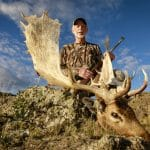 Fallow Deer Patagonia