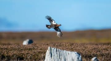 Morton Sporting – Grouse, Dove, Partridge and Pheasant Hunts in England, Scotland, Spain, Argentina and South Africa.